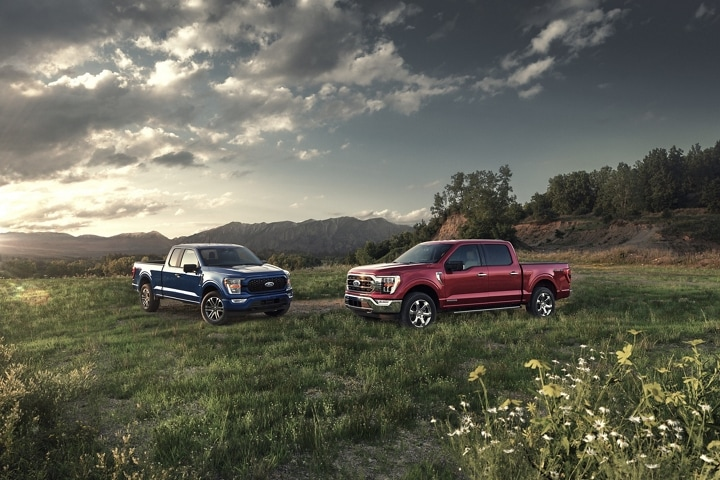Two 2021 Ford F 1 50 parked in a field